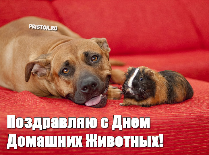 Красивые картинки с Днем Домашних Животных - подборка 4