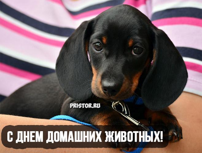 Красивые картинки с Днем Домашних Животных - подборка 5