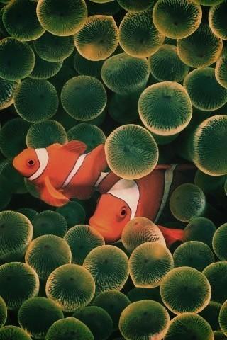 Красивые обои рыбки для заставки вашего телефона - подборка 11