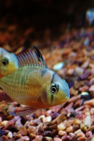 Красивые обои рыбки для заставки вашего телефона - подборка 15