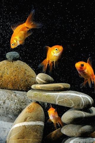 Красивые обои рыбки для заставки вашего телефона - подборка 3