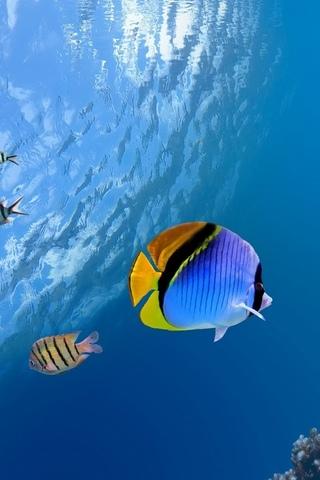 Красивые обои рыбки для заставки вашего телефона - подборка 4