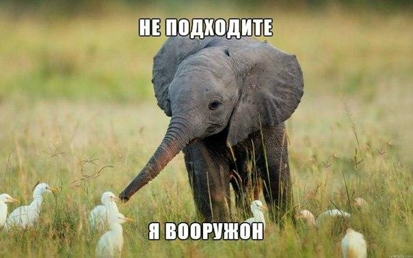 Смешные фотографии и картинки про зверей, животных до слез 11