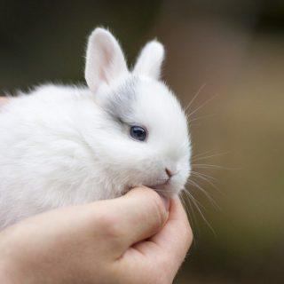 Содержание декоративных кроликов в домашних условиях 3