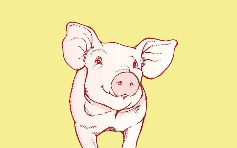 Интересные и прикольные картинки, фото свиньи на Новый год 2019 7