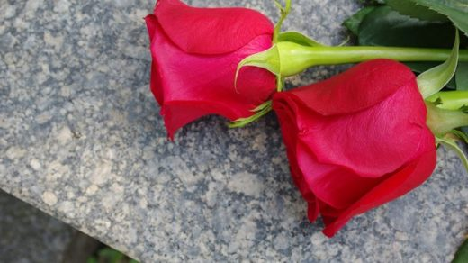 Какие виды цветов следует класть на могилу 2