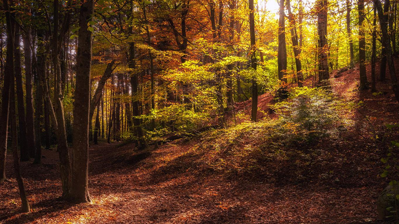 Красивые и невероятные картинки листьев, растений, зелени 1