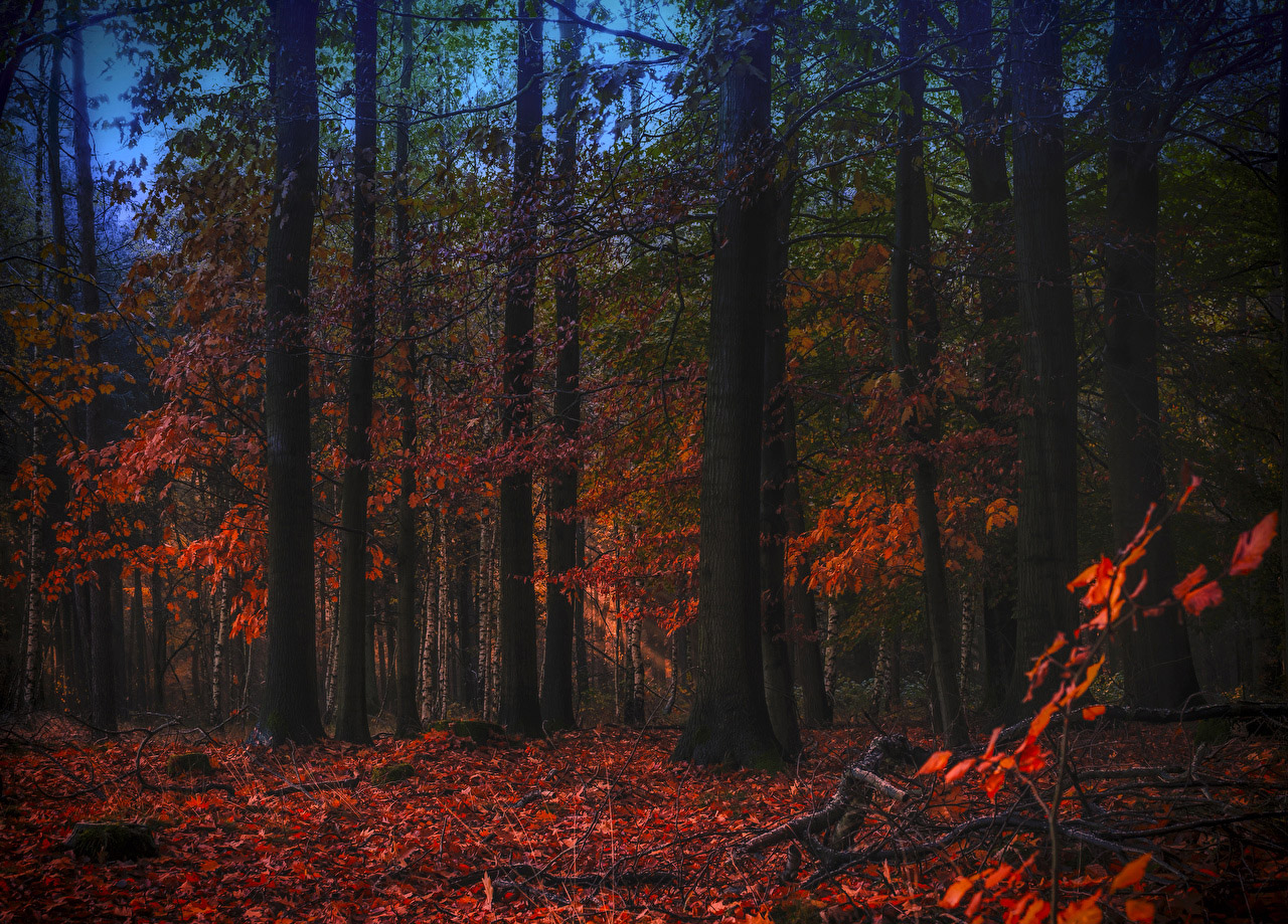Красивые и невероятные картинки листьев, растений, зелени 10