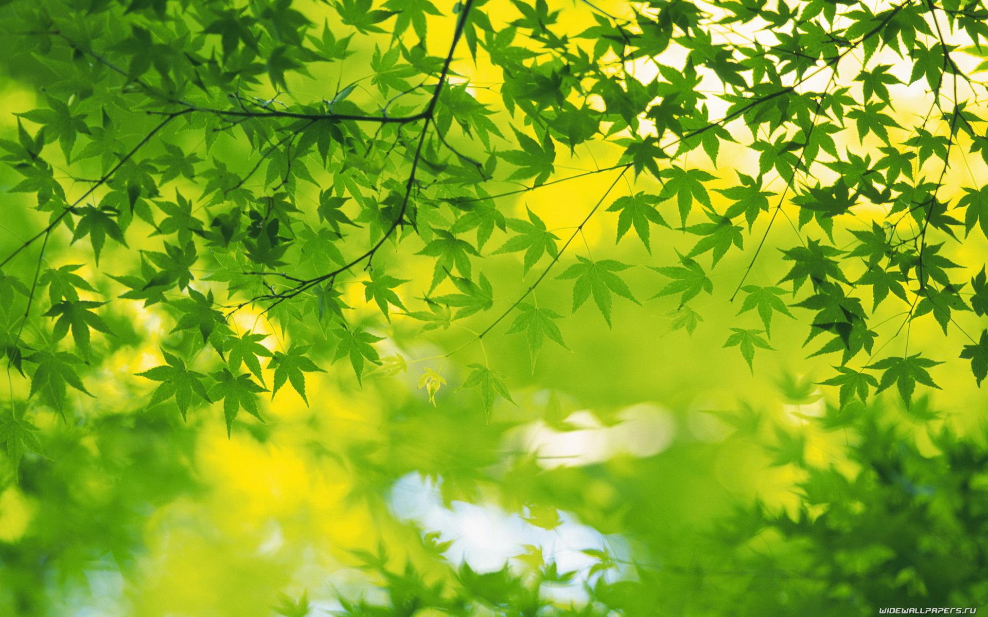Красивые и невероятные картинки листьев, растений, зелени 12