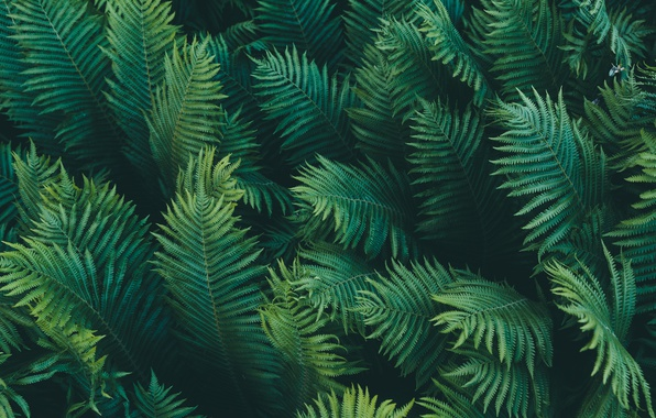 Красивые и невероятные картинки листьев, растений, зелени 13