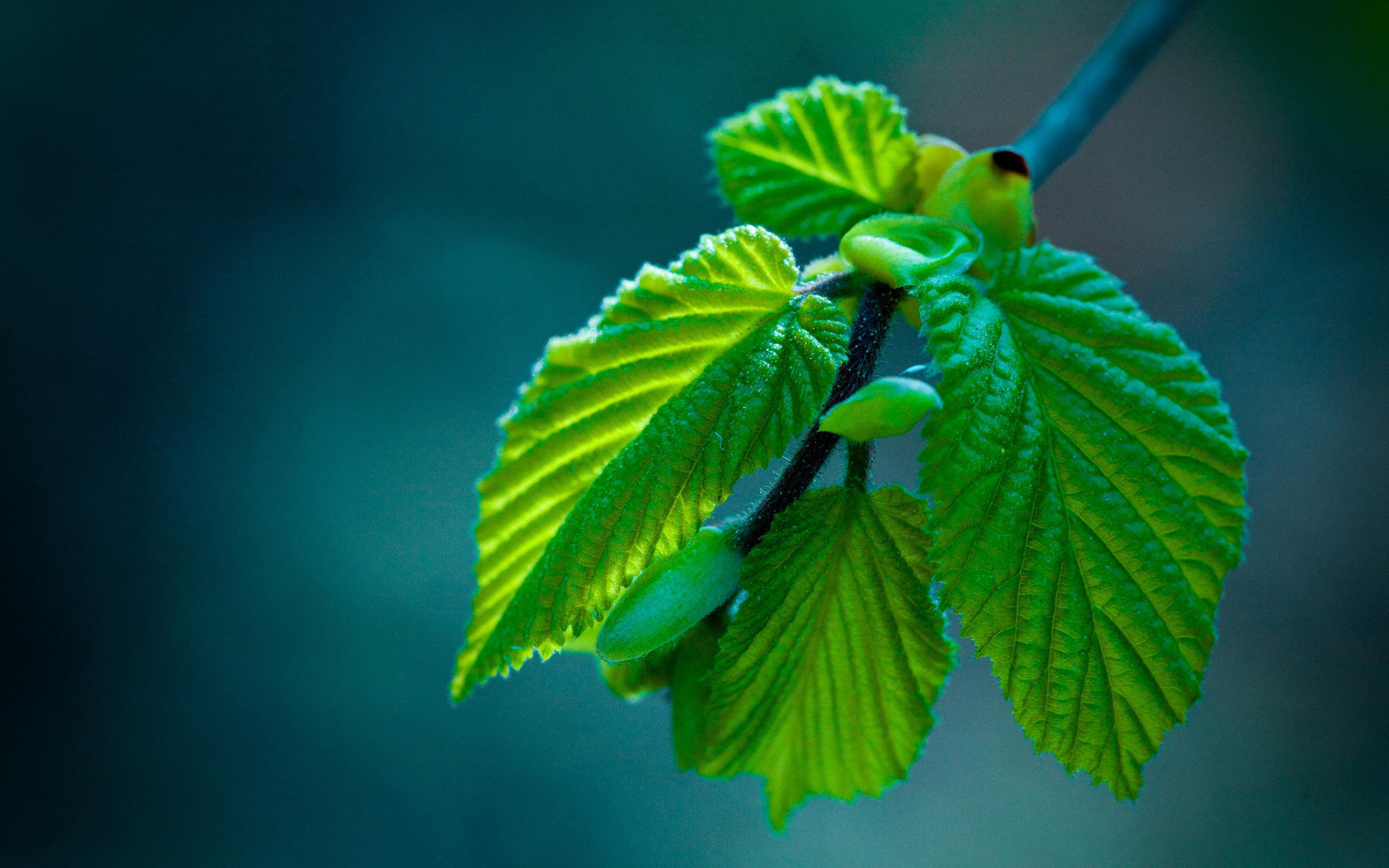 Красивые и невероятные картинки листьев, растений, зелени 14