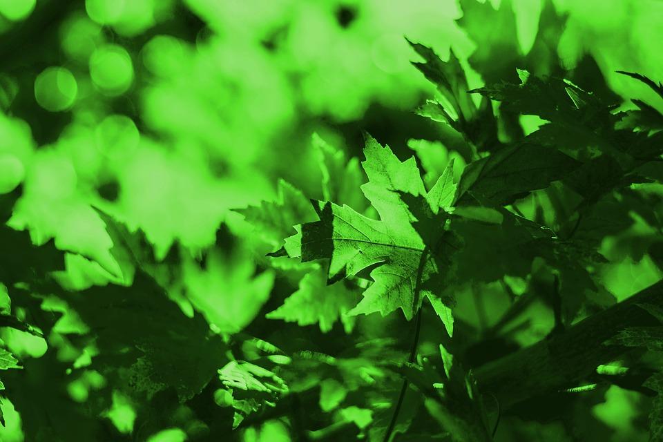 Красивые и невероятные картинки листьев, растений, зелени 17