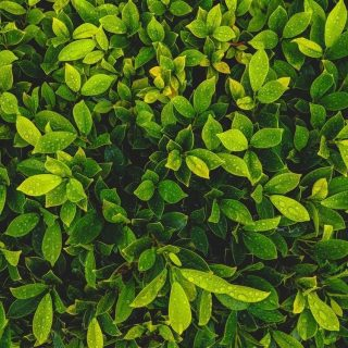 Красивые и невероятные картинки листьев, растений, зелени 3