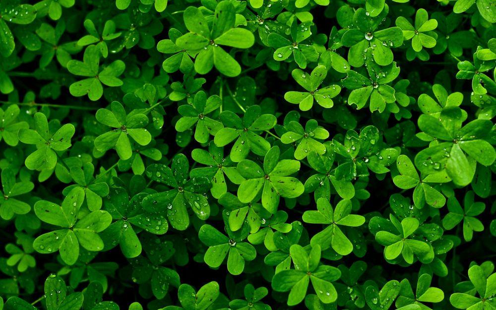 Красивые и невероятные картинки листьев, растений, зелени 6