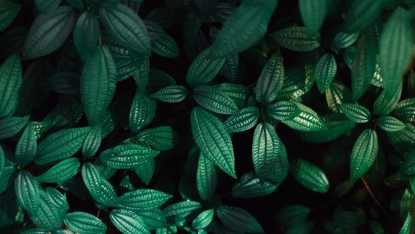 Красивые и невероятные картинки листьев, растений, зелени 7