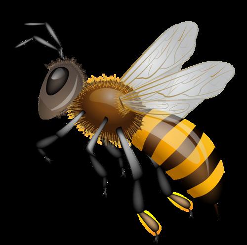 Красивые и прикольные картинки, рисунки осы для детей 12