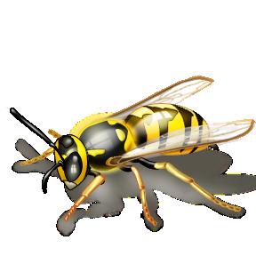 Красивые и прикольные картинки, рисунки осы для детей 15