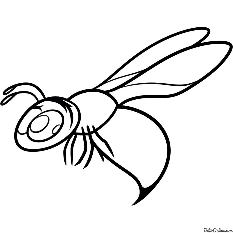 Красивые и прикольные картинки, рисунки осы для детей 2