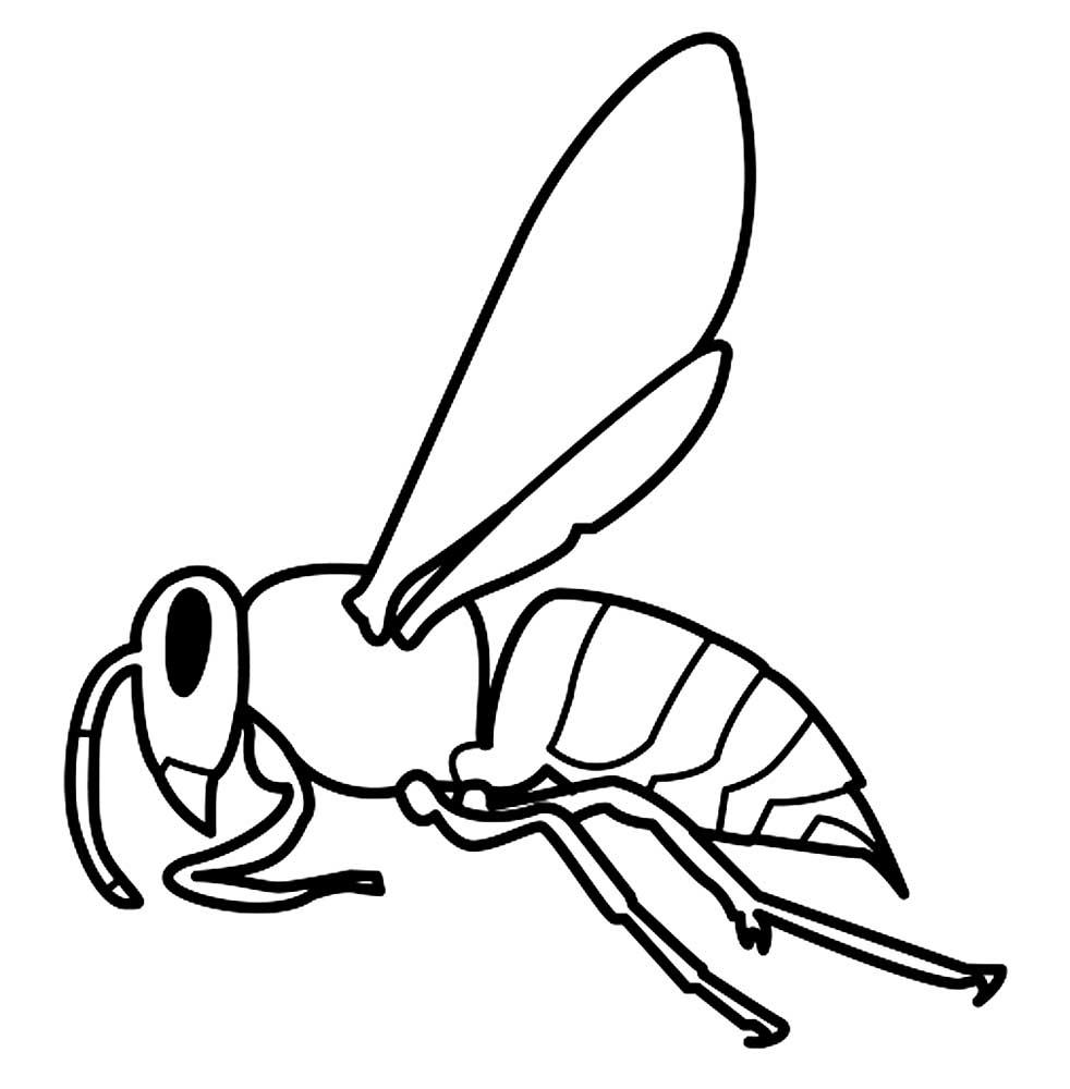 Красивые и прикольные картинки, рисунки осы для детей 3