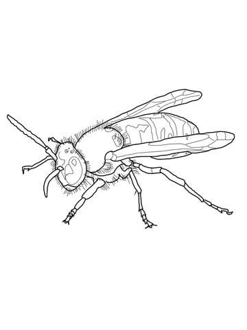 Красивые и прикольные картинки, рисунки осы для детей 7