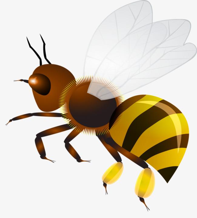 Красивые и прикольные картинки, рисунки осы для детей 9