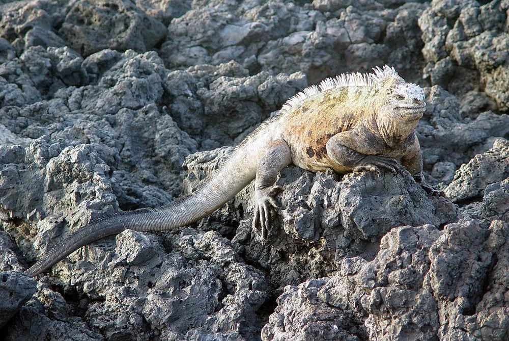 Красивые и удивительные фото, картинки Эквадора - подборка 14