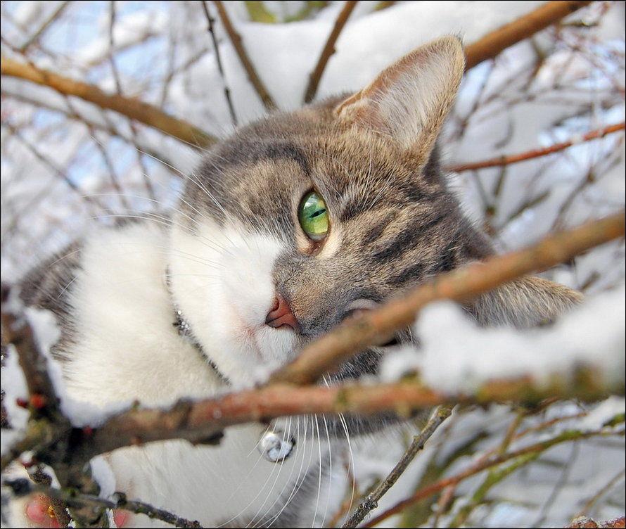 Красивые картинки котиков и кошек зимой в снег и Новый год 1