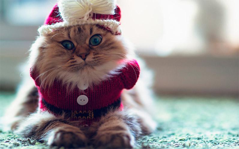 Красивые картинки котиков и кошек зимой в снег и Новый год 13