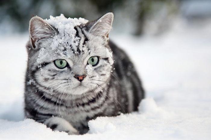 Красивые картинки котиков и кошек зимой в снег и Новый год 15