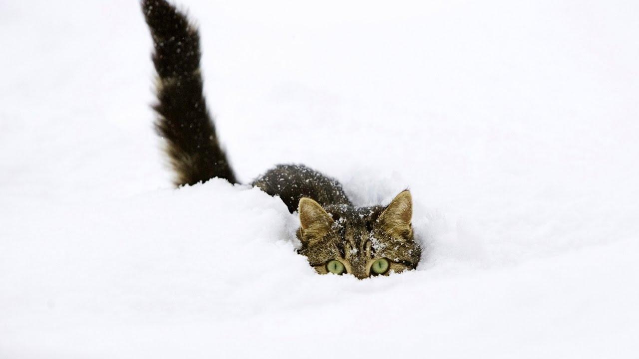 Красивые картинки котиков и кошек зимой в снег и Новый год 16