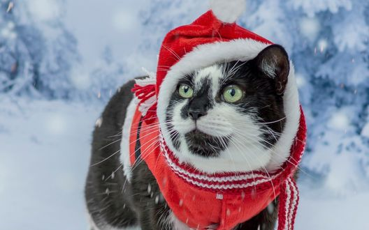 Красивые картинки котиков и кошек зимой в снег и Новый год 18
