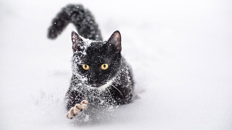 Красивые картинки котиков и кошек зимой в снег и Новый год 2