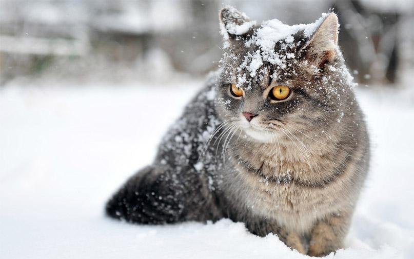 Красивые картинки котиков и кошек зимой в снег и Новый год 21