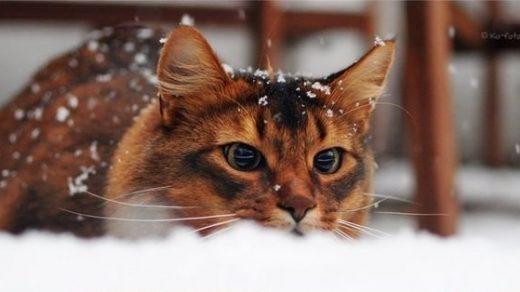 Красивые картинки котиков и кошек зимой в снег и Новый год 22