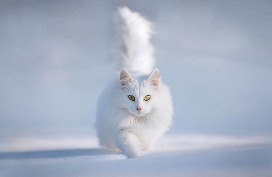 Красивые картинки котиков и кошек зимой в снег и Новый год 4
