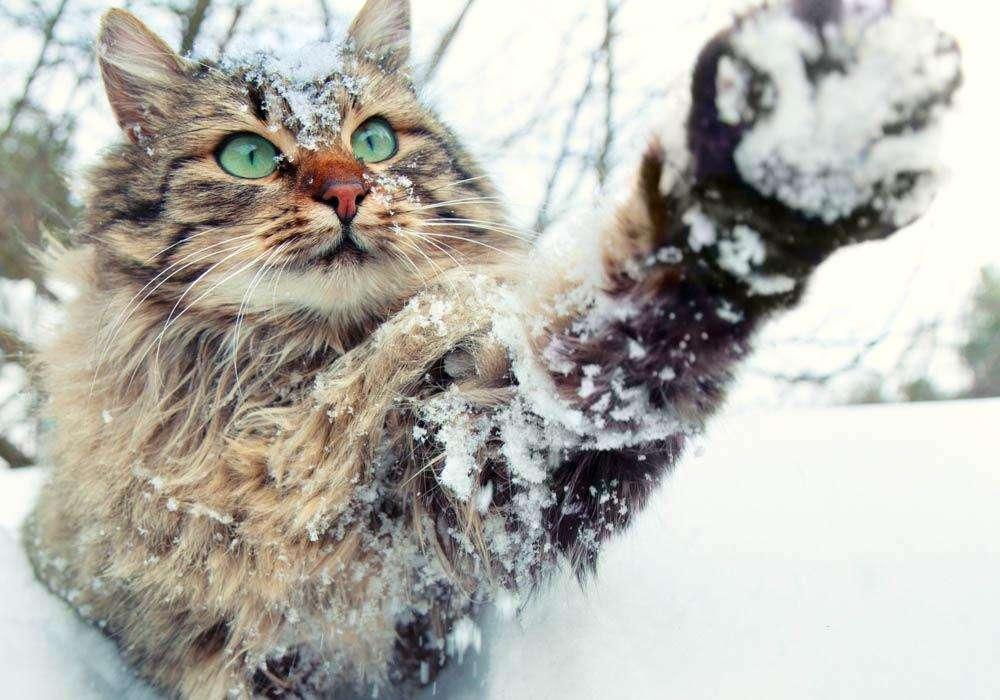 Красивые картинки котиков и кошек зимой в снег и Новый год 7