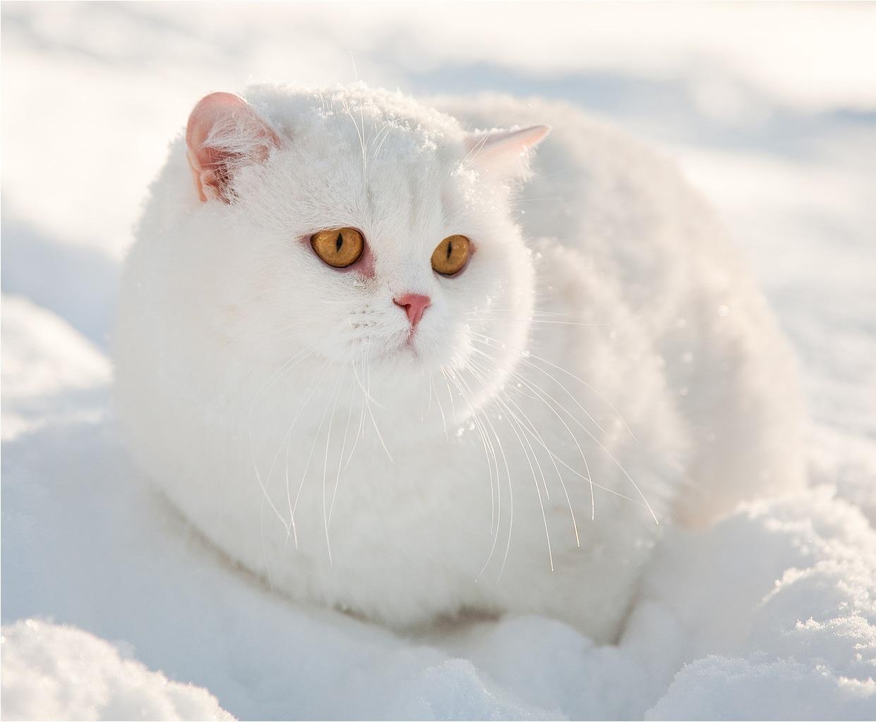 Красивые картинки котиков и кошек зимой в снег и Новый год 8