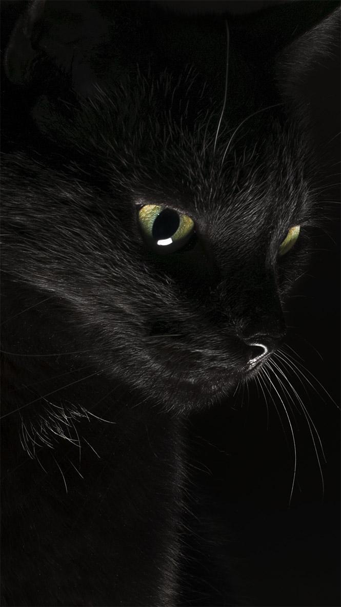 Красивые картинки на телефона на заставку кошки и котики - подборка 1