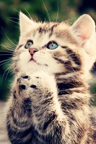 Красивые картинки на телефона на заставку кошки и котики - подборка 11