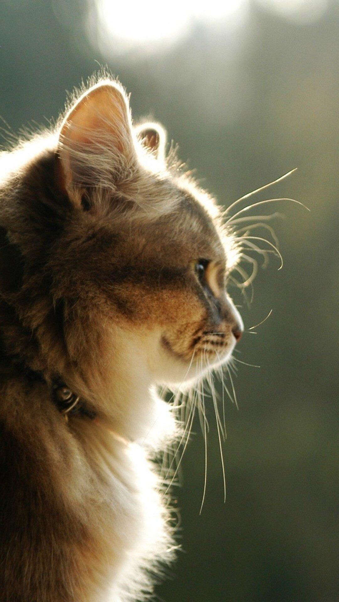 Красивые картинки на телефона на заставку кошки и котики - подборка 12
