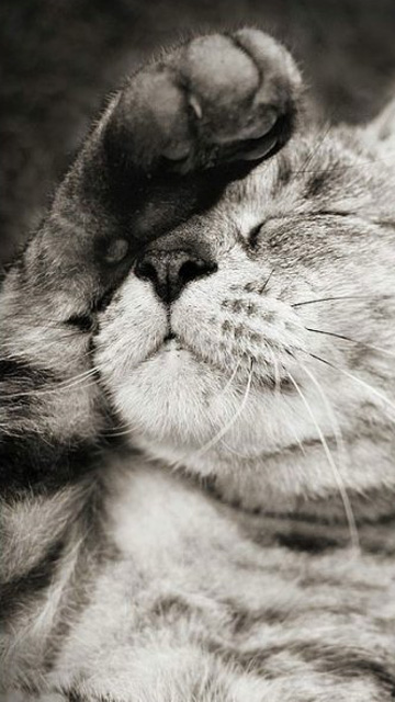 Красивые картинки на телефона на заставку кошки и котики - подборка 14