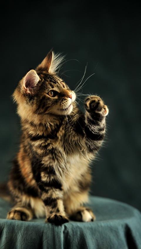 Красивые картинки на телефона на заставку кошки и котики - подборка 15