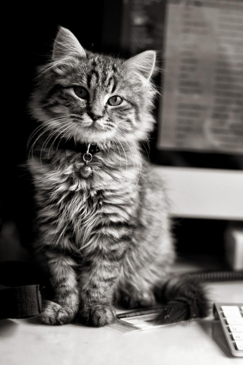 Красивые картинки на телефона на заставку кошки и котики - подборка 3