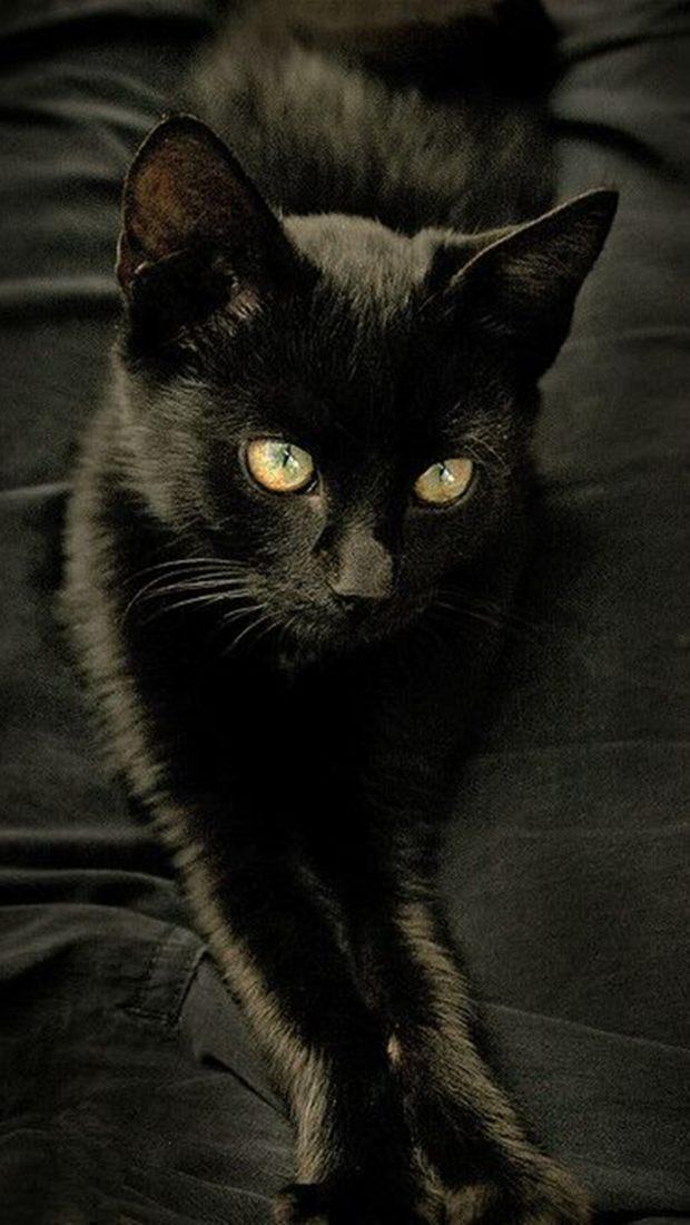 Красивые картинки на телефона на заставку кошки и котики - подборка 6