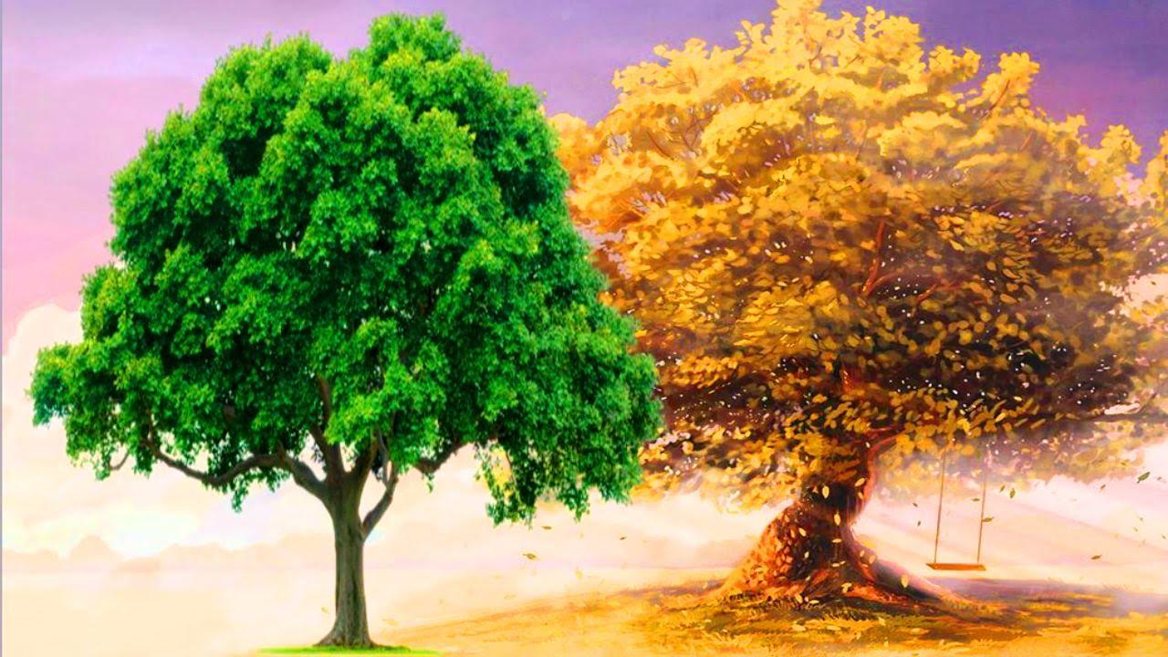 Красивые картинки с деревьями для детей и малышей - подборка 20 фото 10