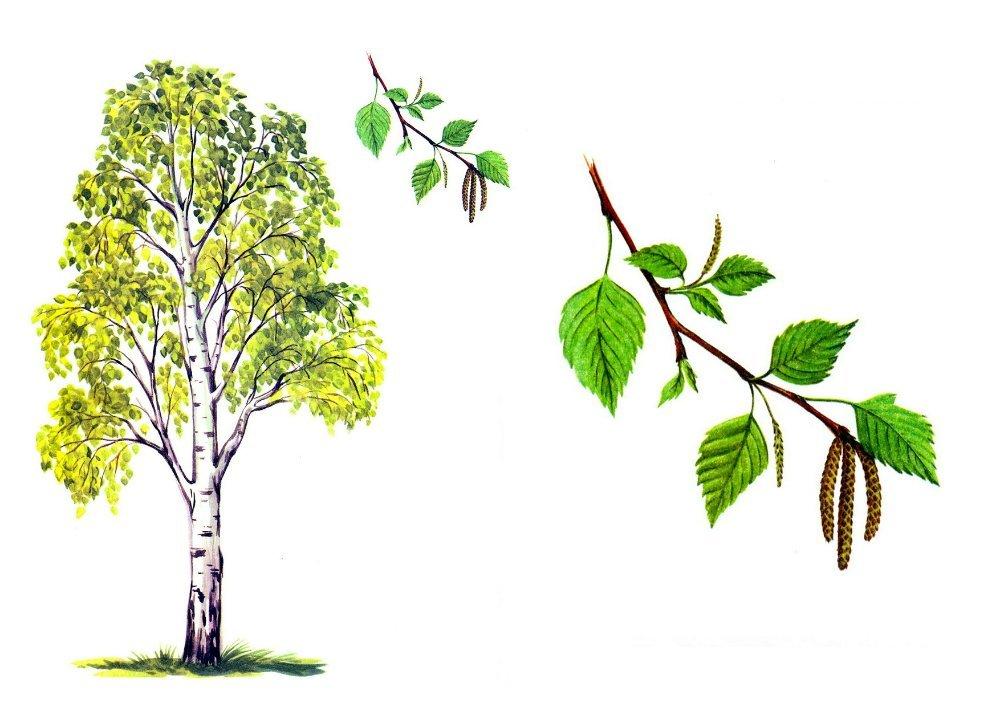 Красивые картинки с деревьями для детей и малышей - подборка 20 фото 15