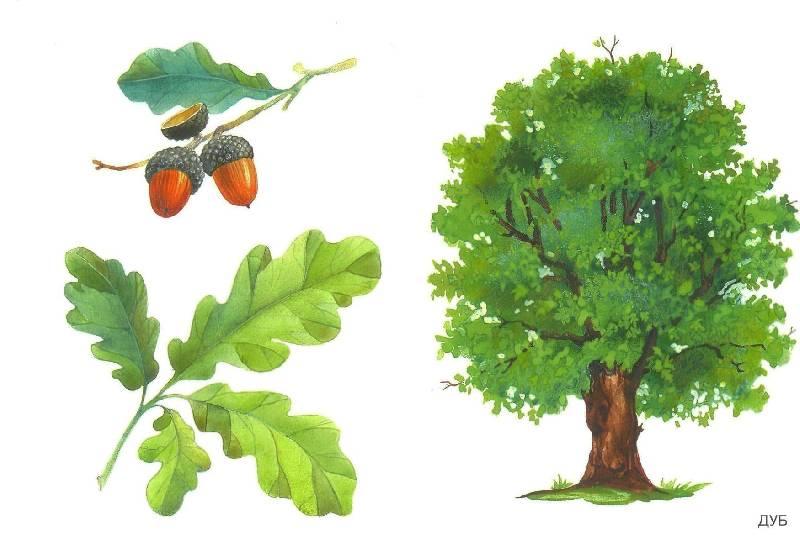 Красивые картинки с деревьями для детей и малышей - подборка 20 фото 20
