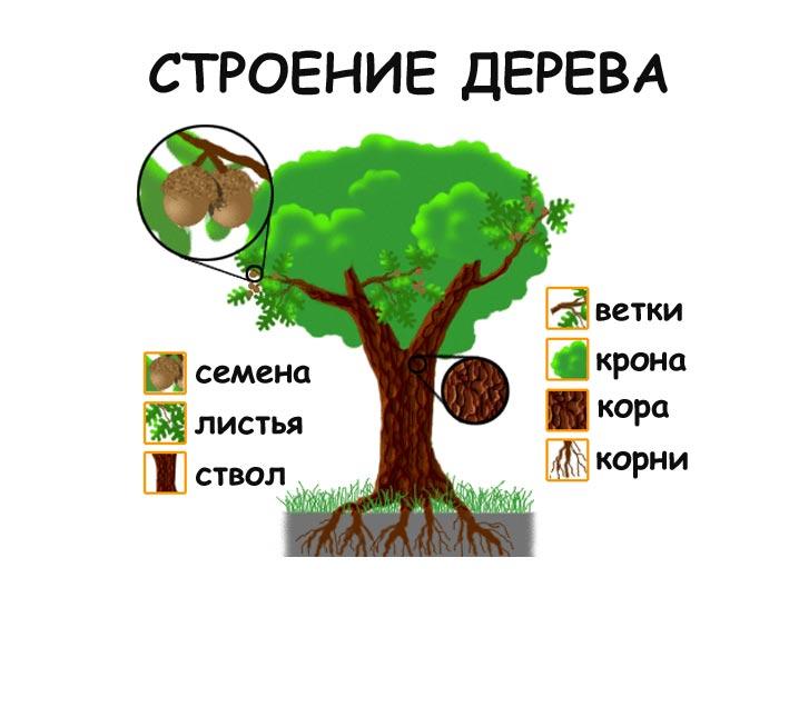 Красивые картинки с деревьями для детей и малышей - подборка 20 фото 8