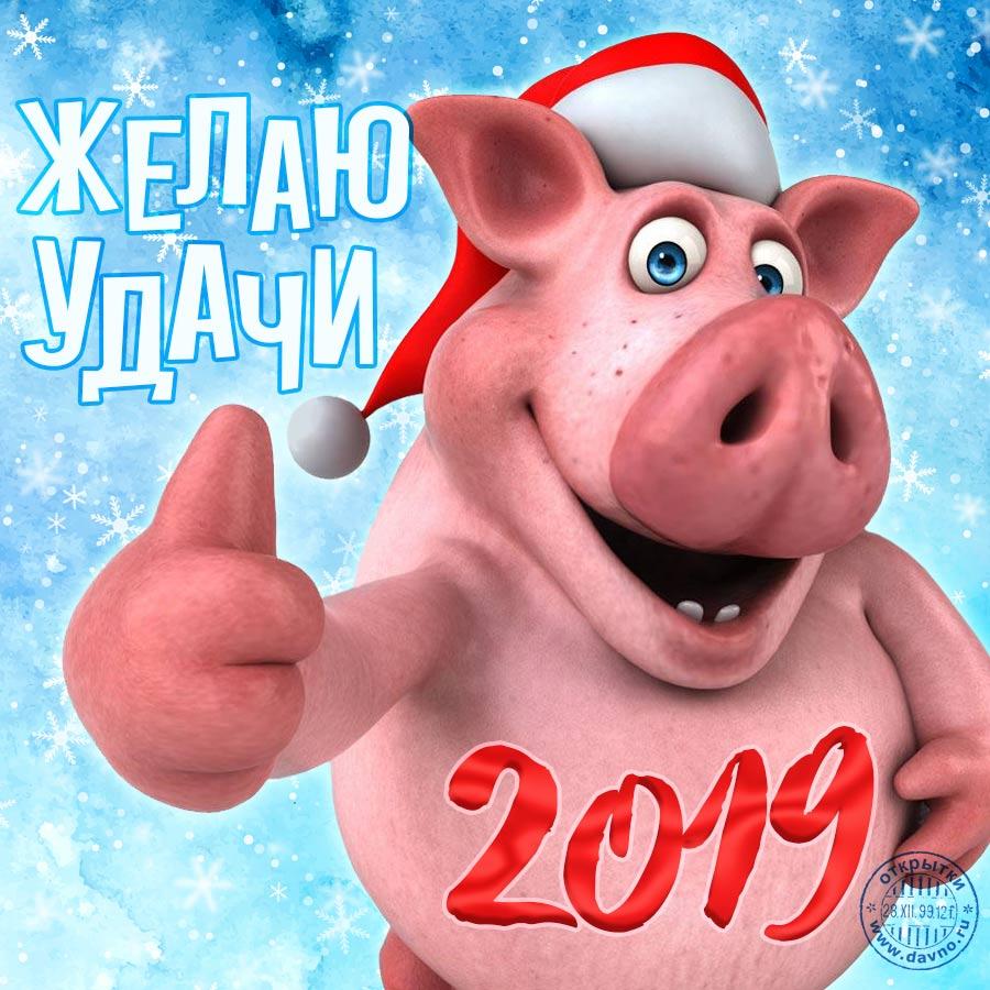 Новогодние открытки 2019 с изображением свиньи - поздравления 9