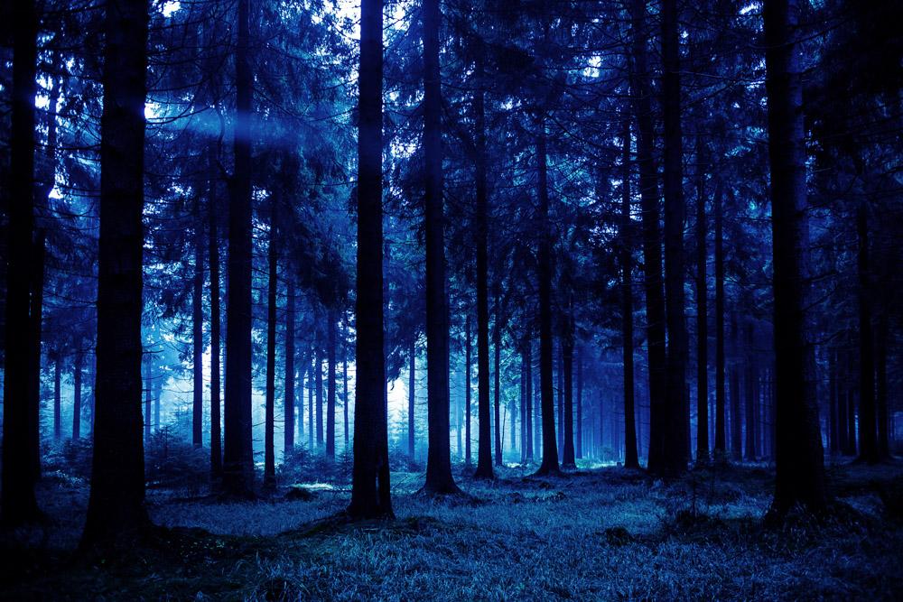Зимняя ночь картинки красивые и удивительные - подборка 20 фото 3